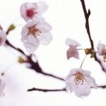 花粉症のツボ