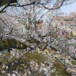桜三題 悠久山 柿川 アオーレ